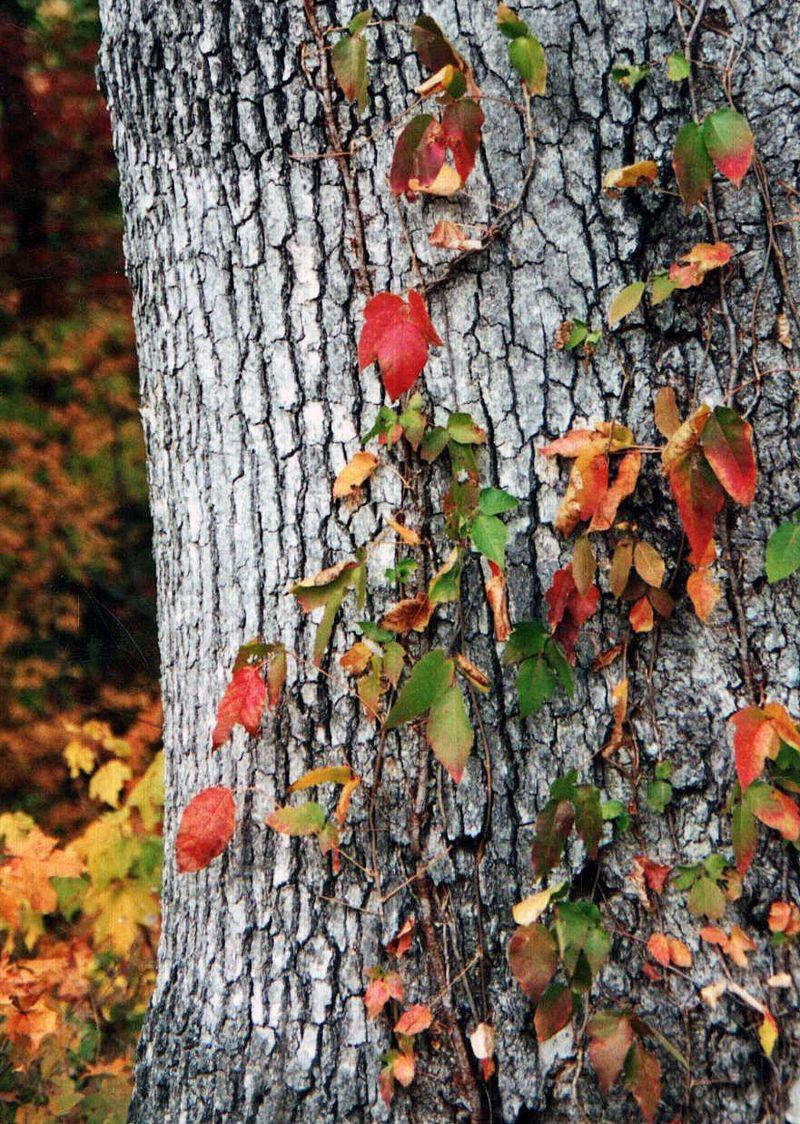 Fall.tree.TNM