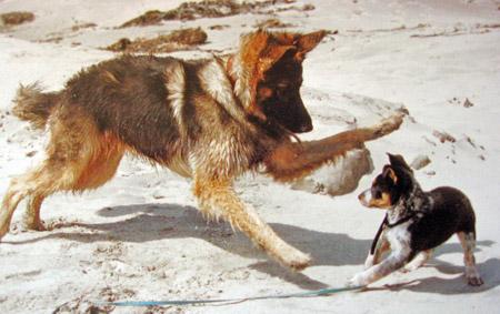Rowdybigdog