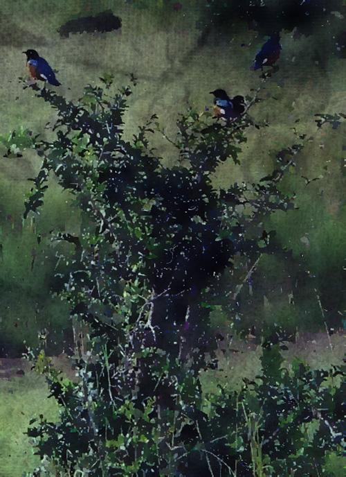 Kenya.bush.birds.reserveflat-1