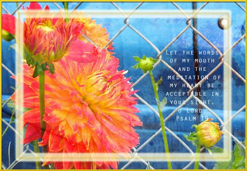 Flameflowerbluecar
