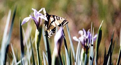 Butterfly.az