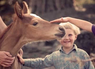 *justin.foal2-1