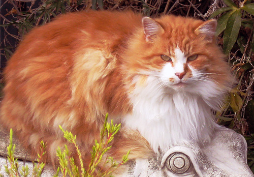 Orangecatfixed
