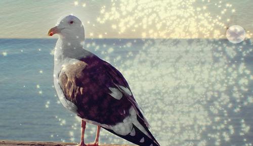 Seagulloilrig