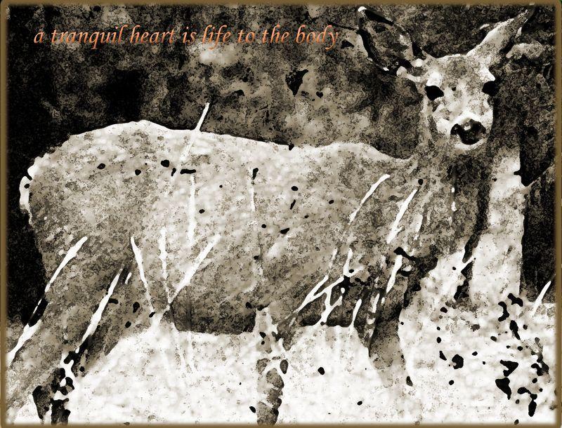 Deer_edited-1