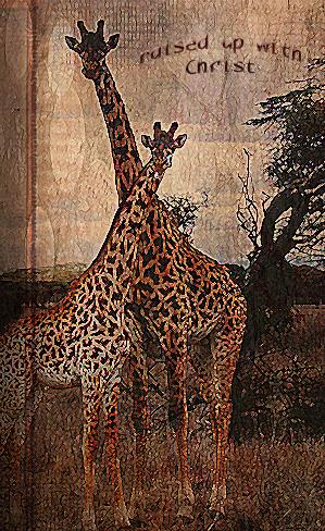 GiraffeAndBaby_edited-1