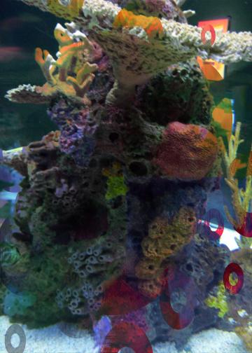 Aquarium1_edited-1