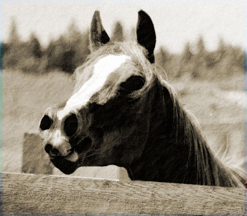 Horseheadfl