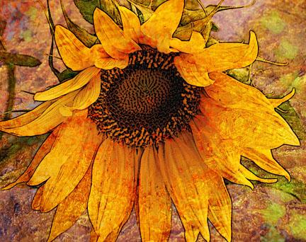 Sunflowertext