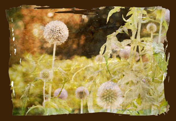 Fluff flower