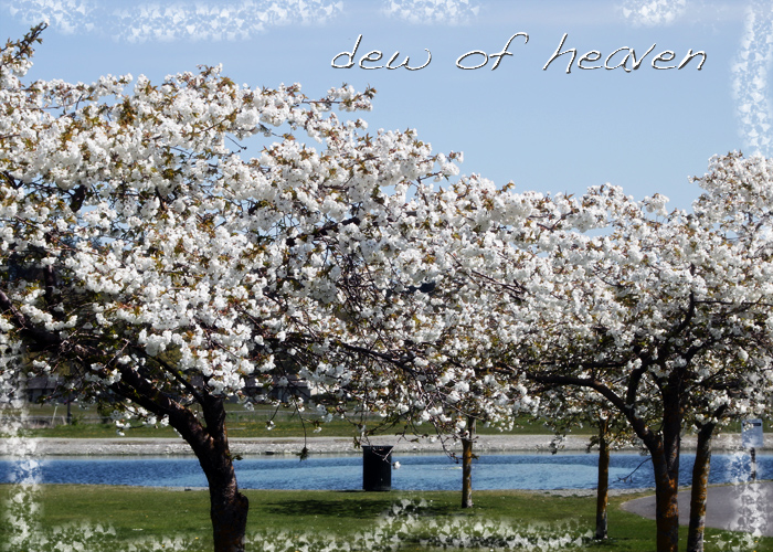 Blossomssequim