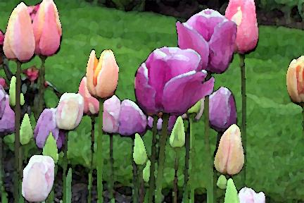 Pastel Tulips_edited-1