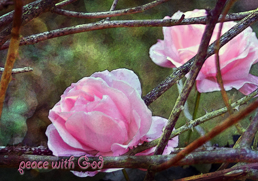 Rosespinkpeacewith God_edited-1