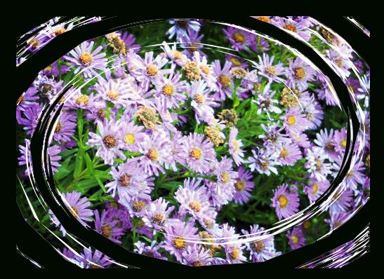 Purpleflowerswirled