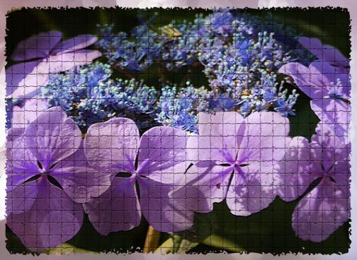 Purplepinkflower