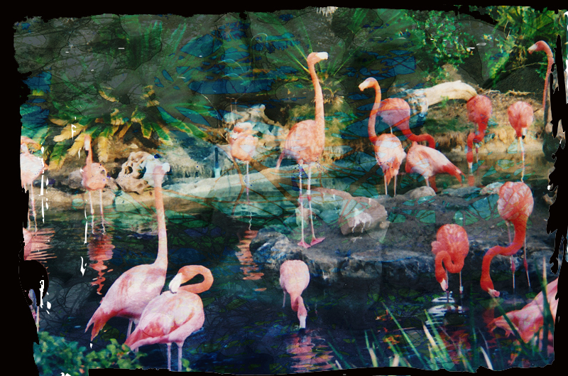 Flamingues_edited-2