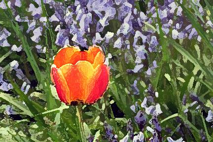 Orangepurple