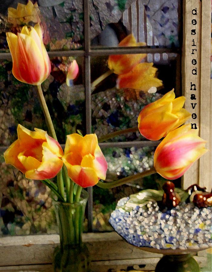 Tulipswindowhaven