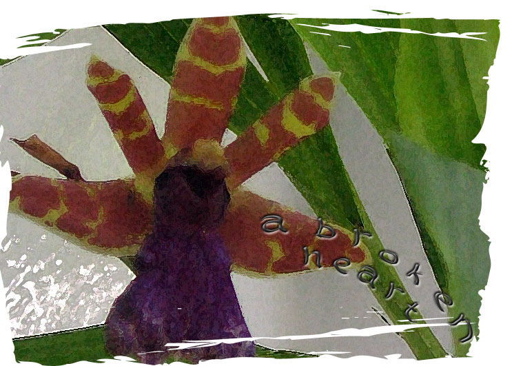 Orchidabrokenheart