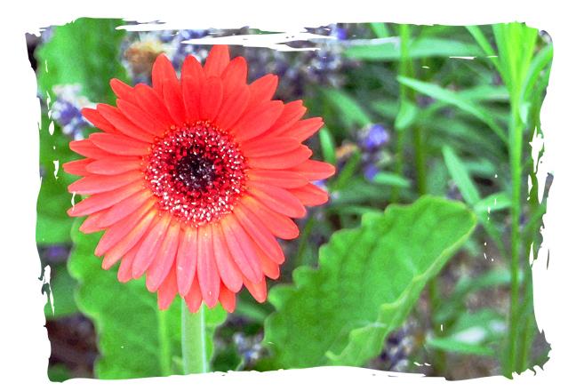 ZzRedflower