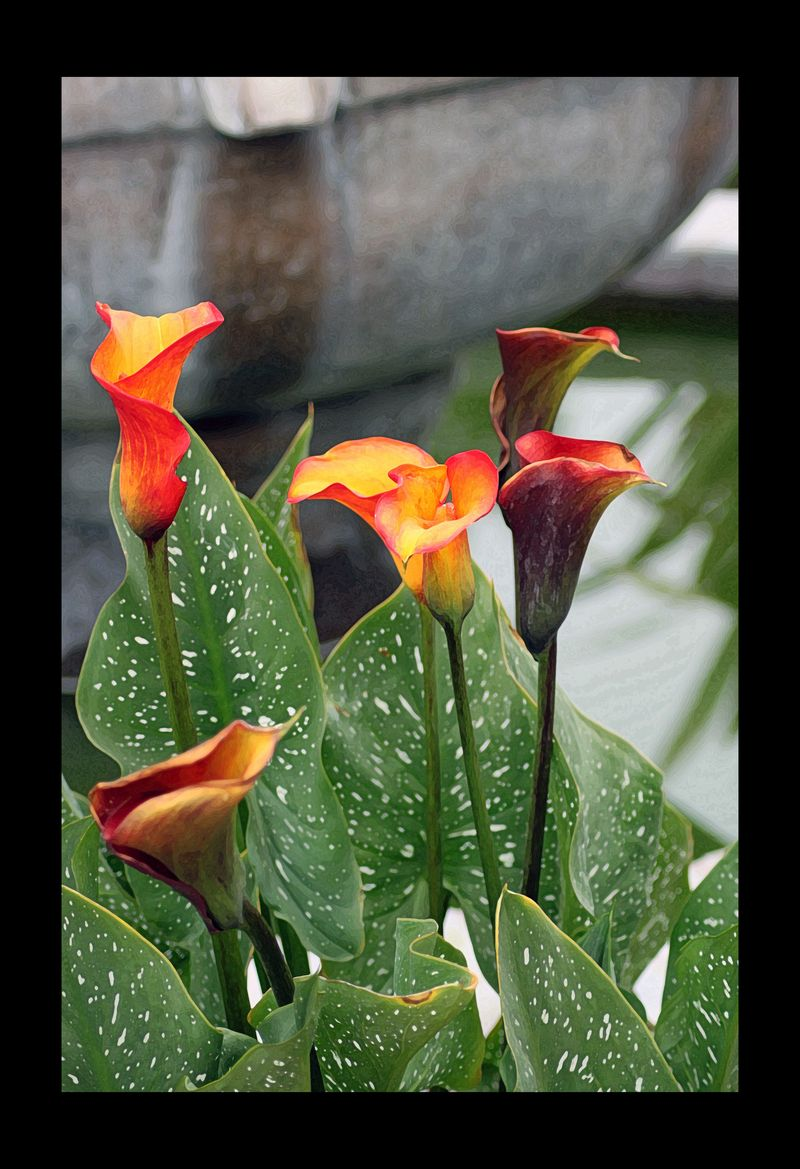 Florawalkfountain