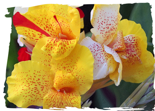 Yellowflowerlosal