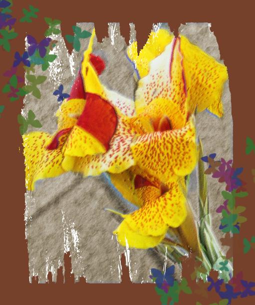 Yellowbutterfulyflower
