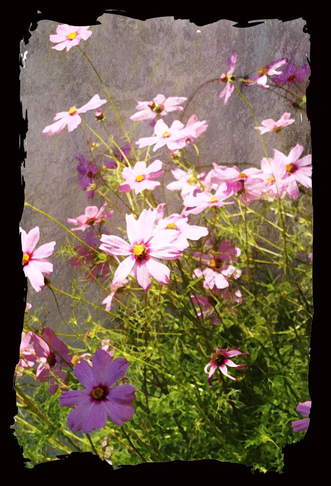 Pinkflowers2edited-1