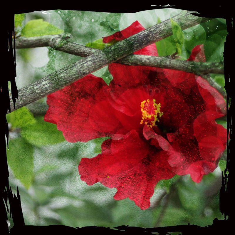 Redflowerbranches