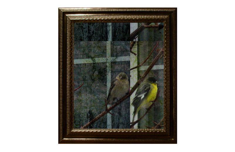 Momsfinches