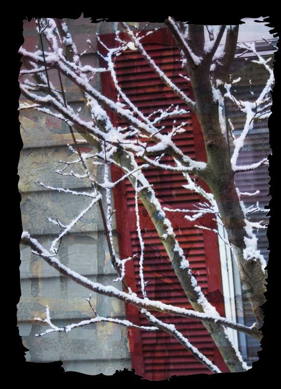 Snowtreered