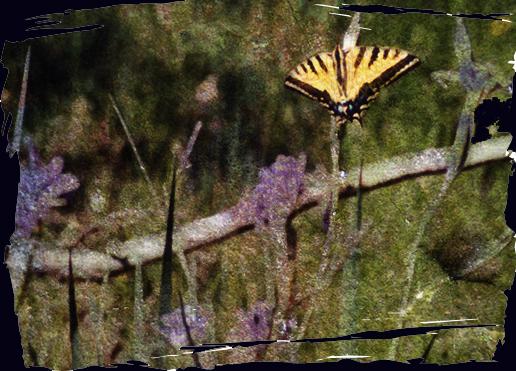 Butterflybranch
