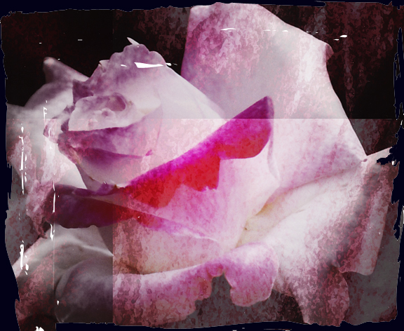 Pinkroselayer