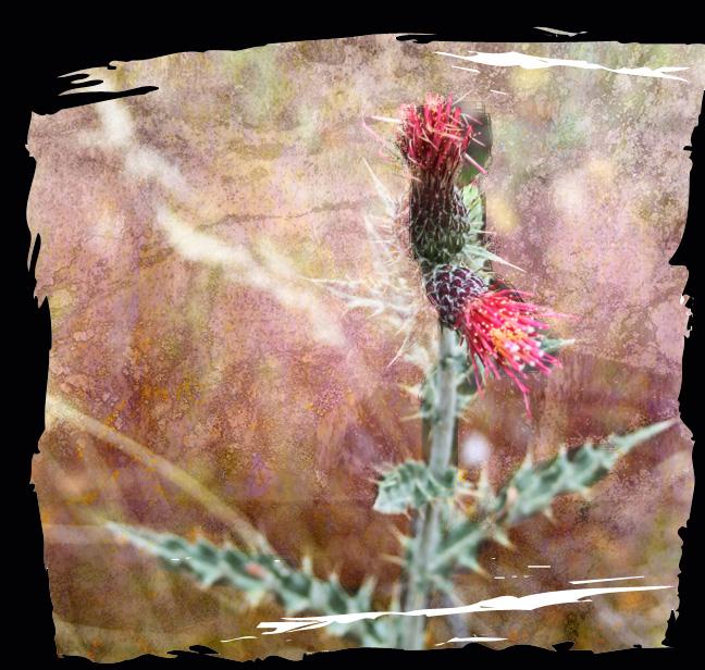 Acts 20 cactus