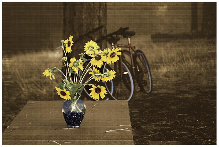 Northrimflowersbike