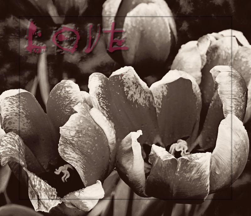 Lovetulips