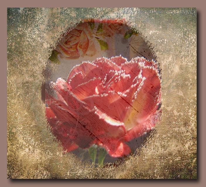 Rosebowl2