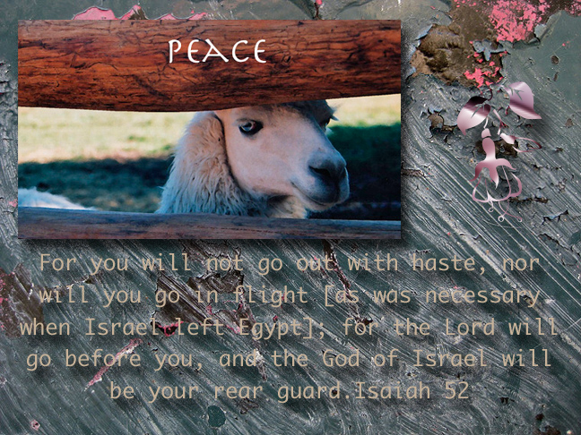 Peace llama
