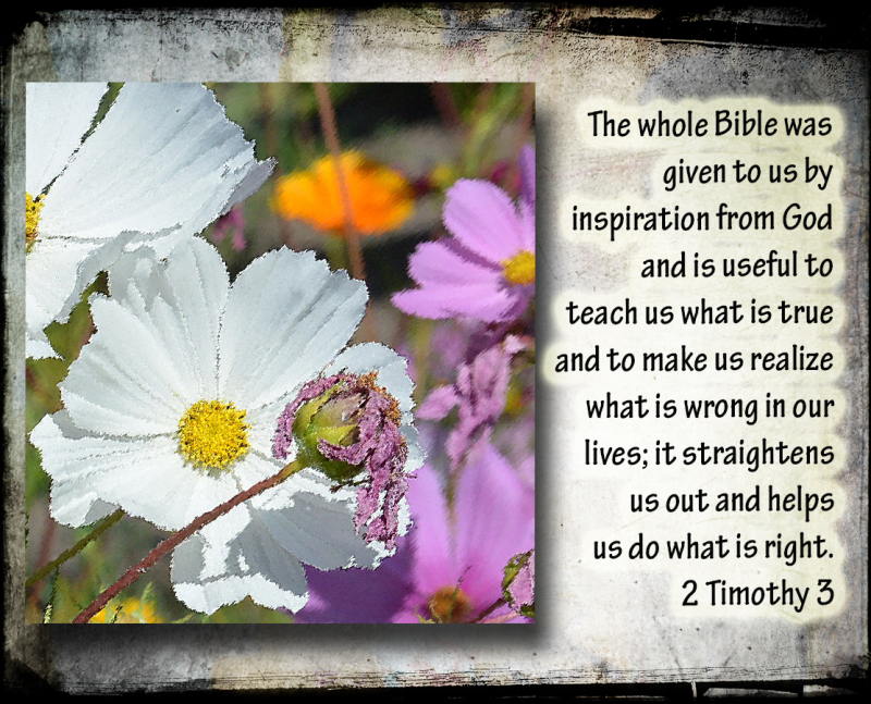 The whole Bible_edited-1
