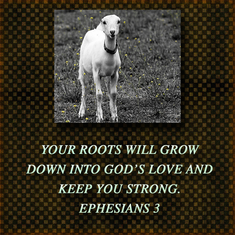 YOURROOTS